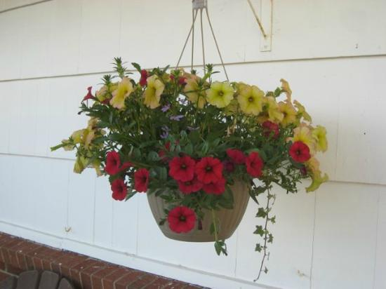 Rainbow Motel: Flowering baskets outside every room
