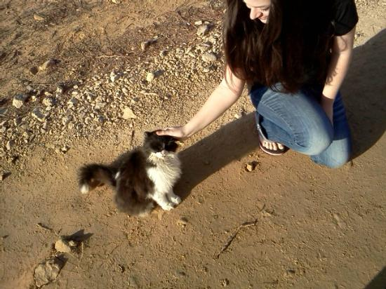 Keren Kolot, Kibbutz Ketura: Cute kitty we met there