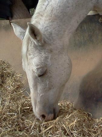 Keren Kolot, Kibbutz Ketura: Horse