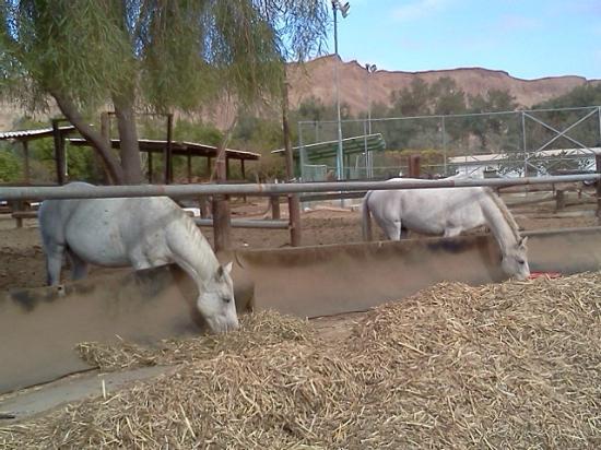 Keren Kolot, Kibbutz Ketura: Two sweet horses