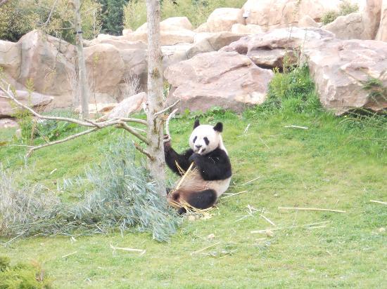 Saint-Aignan, France : panda