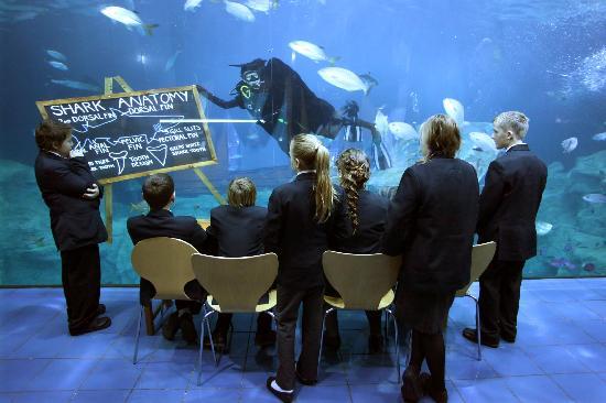 The National Marine aquarium - Driving Marine Conservation Through Engagement