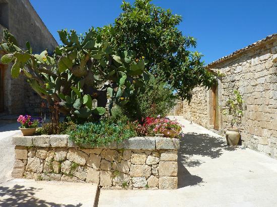 Agriturismo Borgo Alveria: Cactus bushes
