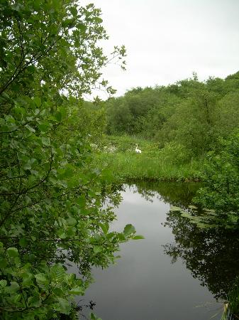 Craggaunowen: view from the bridge