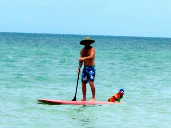Sabal Palms Inn: try paddle boarding