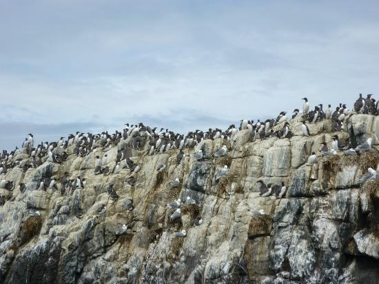 Seahouses, UK: Farne Islands