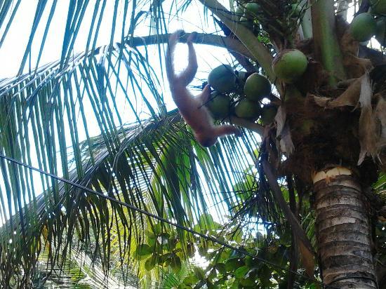 Tarantula Eco Hostel: Mono Capuchino