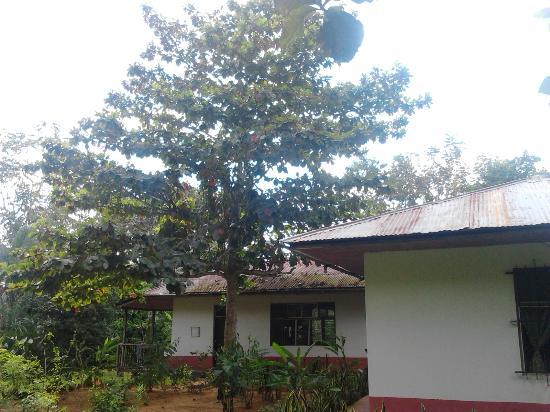 Tarantula Eco Hostel: Instalaciones