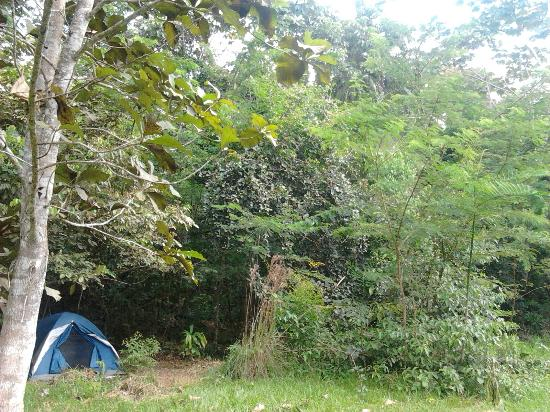 Tarantula Eco Hostel: Zona acampada
