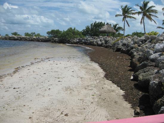 Kawama Yacht Club: more seaweed