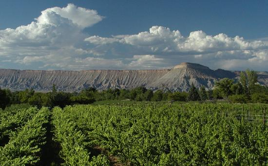 Palisade, CO: Main Vineyard