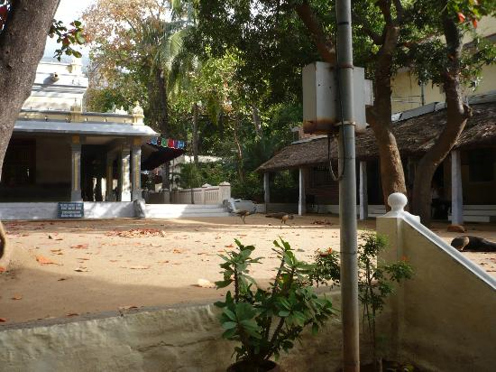 Thiruvannamalai, India: Ramana Ashram 2