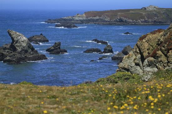 Bodega Head: THE ENDLESS COAST