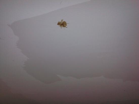 Hotel des Andelys : Materiale sconosciuto attaccato al soffitto