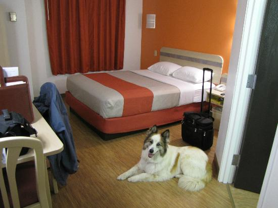 Motel 6 Chicago Joliet - I-55 : Foxy in our very nice room!