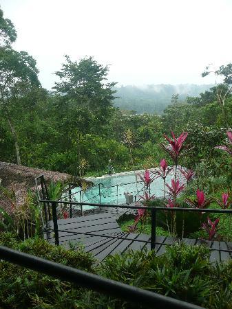 Hamadryade Lodge: la piscine en contebas