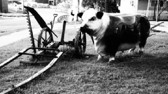 Barnyard BBQ: Dat Cow
