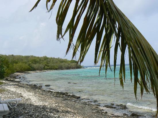 Tamarindo Estates Beach Apartments: beach is all coral