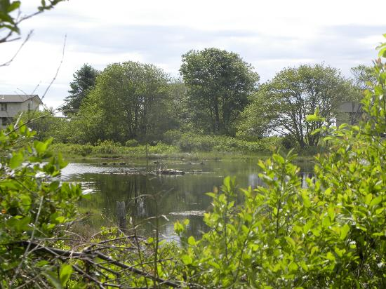 Wells Reserve at Laudholm: Pond found along trail to the beach.