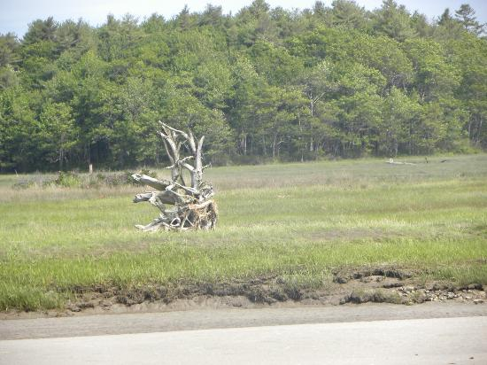 Wells Reserve at Laudholm: Beautiful driftwood.
