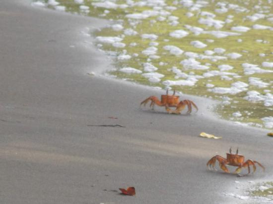 Suital Lodge: Crabs at the Gulf