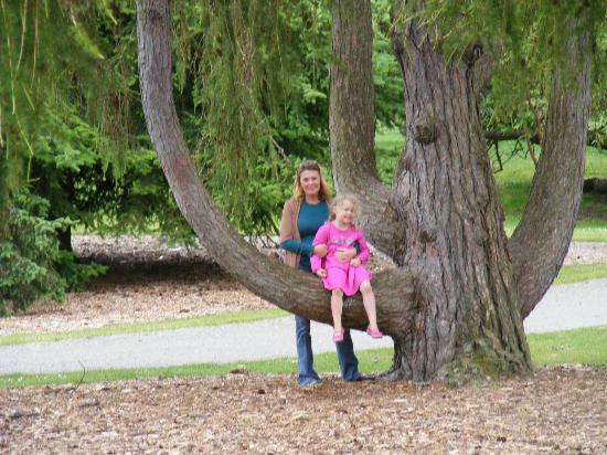 Point Defiance Park : The trees we climbed as kids