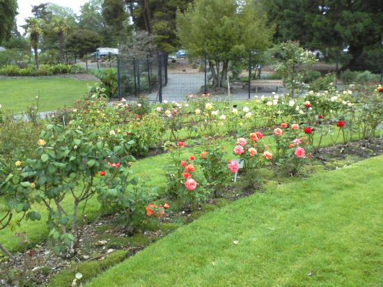 Point Defiance Park : The rose garden, my grandmother use to love to visit here