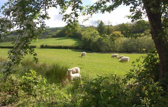 The Old Mill Soar: meadow pastureland  adjoining the garden, views over rolling countryside
