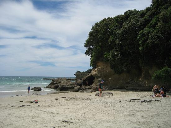 Tawharanui Regional Park照片