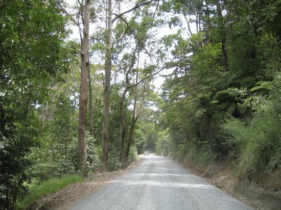 Tawharanui Regional Park: On the way to Tawharanui