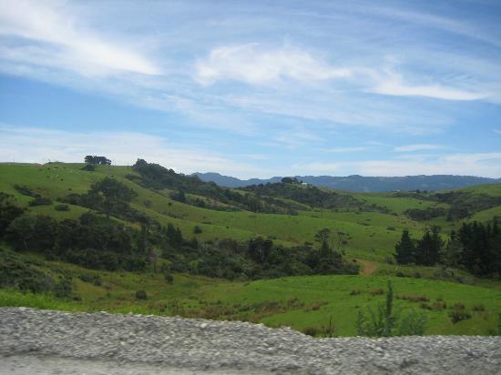 Tawharanui Regional Park: Scenery on way to Tawharanui