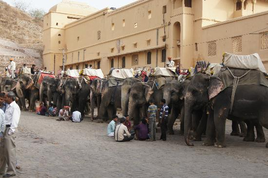 Classic Taj Day Tours: Our Elephant rides