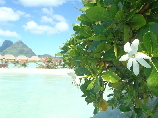 Bora Bora Pearl Beach Resort & Spa: vue depuis la piscine 2