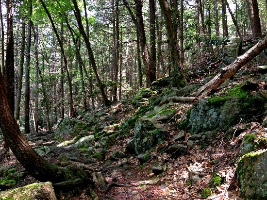 Trough Creek State Park: On the Balanced Rock trail