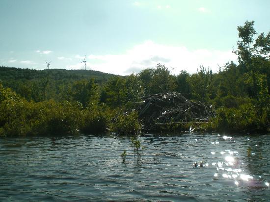 Washington, New Hampshire: Vickery Pond