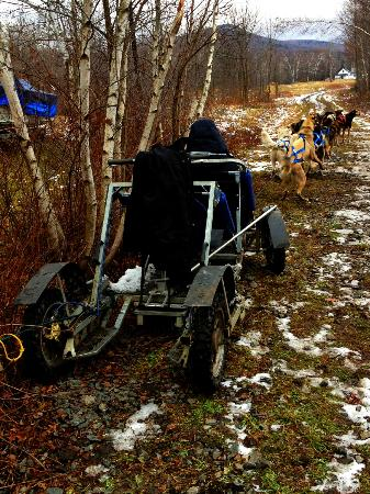 Muddy Paw Sled Dog Kennel - Day Tours: Rarin' to go!