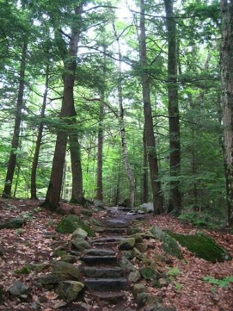 Rockywold-Deephaven Camps: One of the many wooded paths