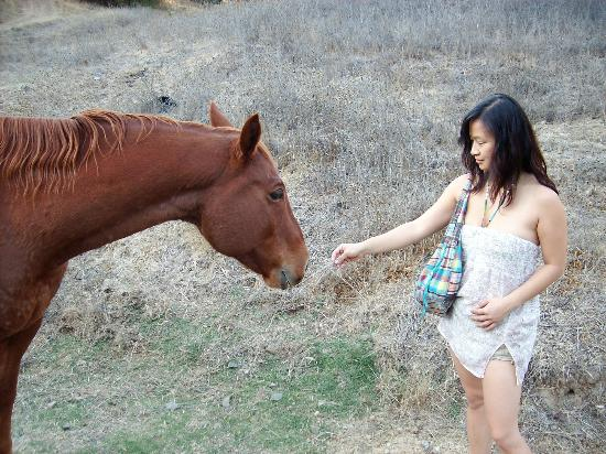 Vichy Springs Resort: Friendly Horse along the trail to Chemisal Falls