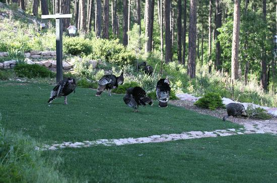 Peregrine Pointe Bed and Breakfast: Turkeys out back