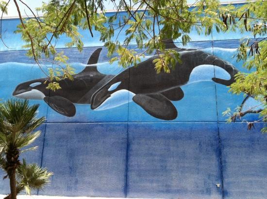 Whaling Wall: big beauties