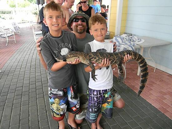 Marriott's Harbour Lake: gator and reptile show