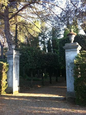 Villa del Pino: Pino