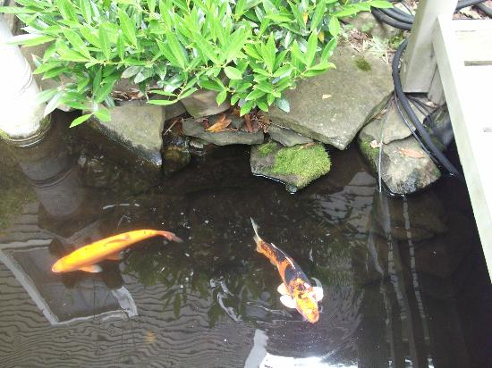 Crowne Pointe Historic Inn & Spa: Koi fish