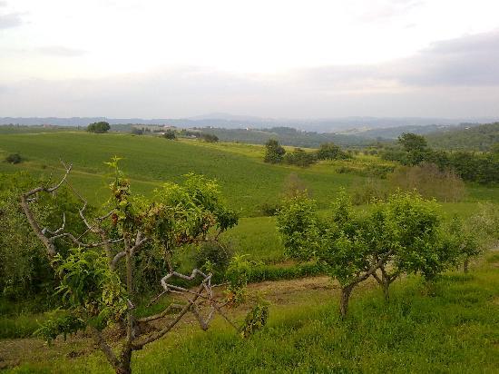 Domus Etrusca Agriturismo: una veduta dalla domus etrusca