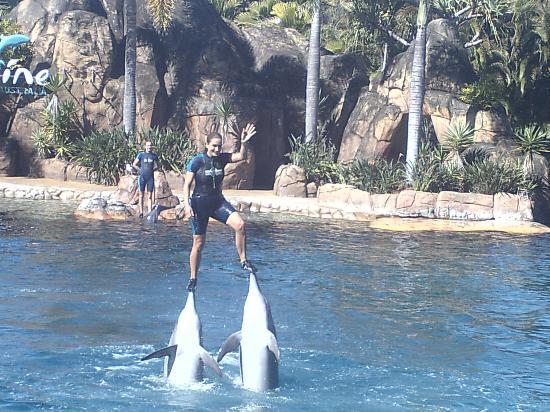 Main Beach, Australia: Dolphin show