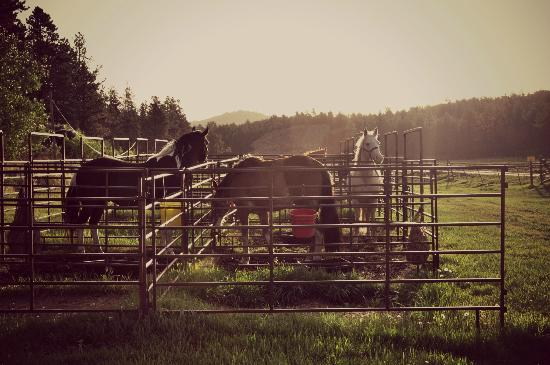 Mount Rushmore / Hill City KOA: Our horses in the overnight corrals