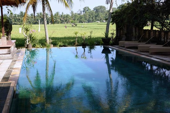 Green Field Hotel and Bungalows: The magical pool!