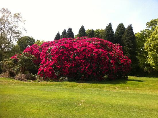 Fern Rock Bed & Breakfast: Rhododendron in Kerry