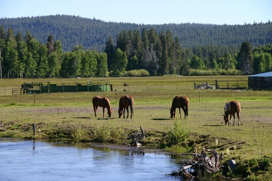 The Aspen Inn: Beautiful horses across the highway