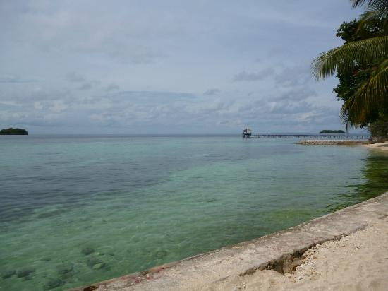 Black Marlin Dive Resort: Black Marlin - View from Beach
